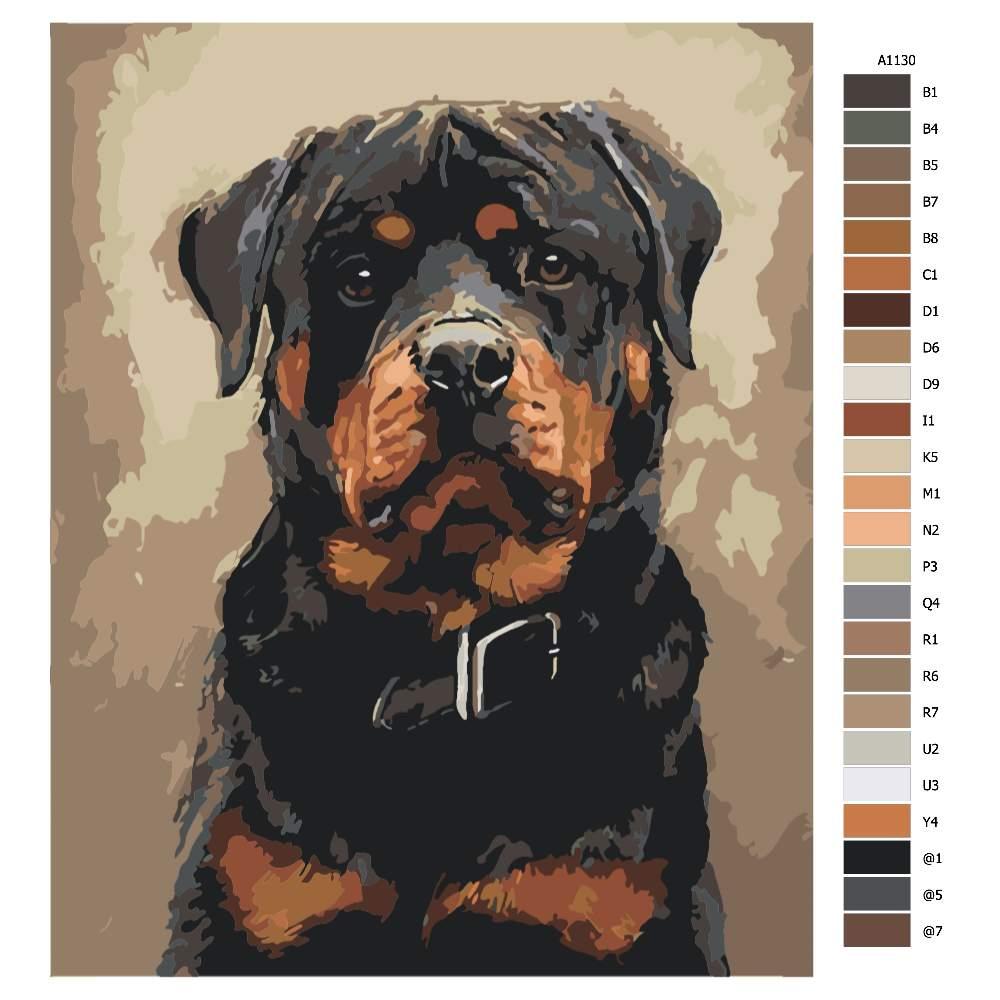 Návod pro malování podle čísel Pes s obojkem