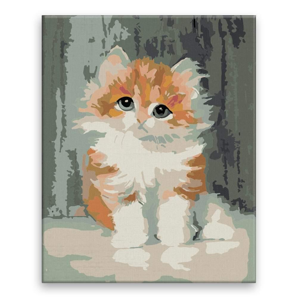 Malování podle čísel Roztomilé koťátko