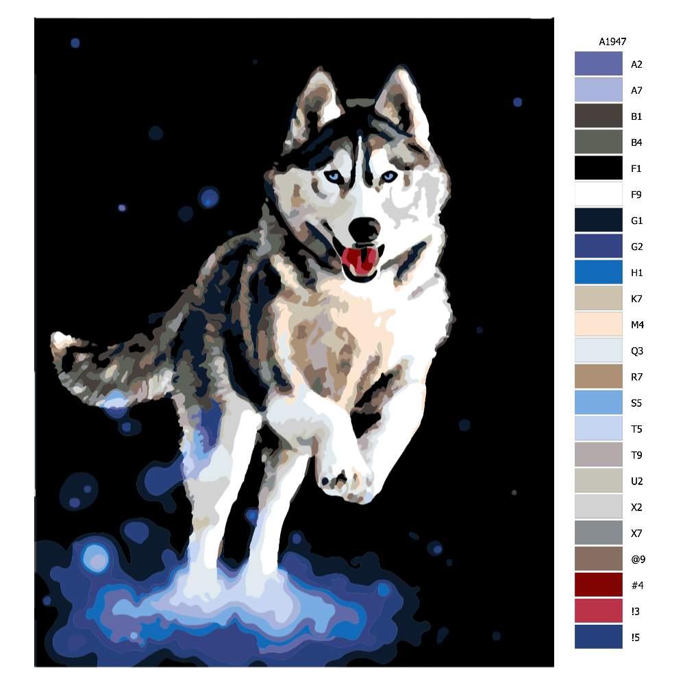 Návod pro malování podle čísel Spokojený husky