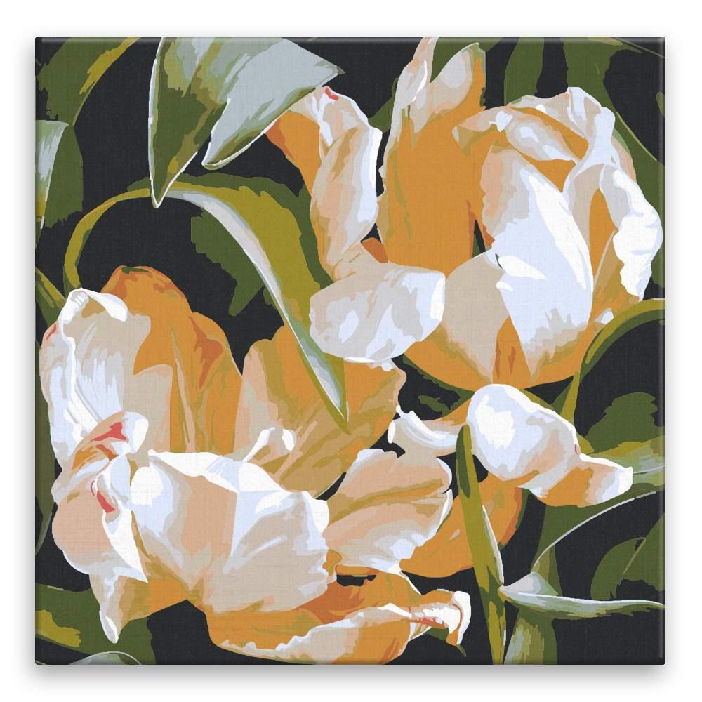 Malování podle čísel Dva okrakrasné tulipány v odkvětu