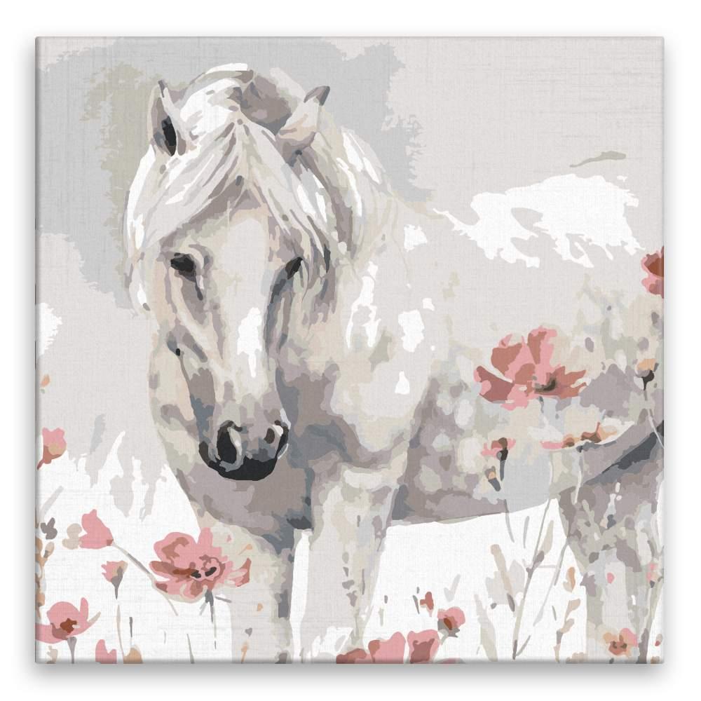 Malování podle čísel Divoký kůň